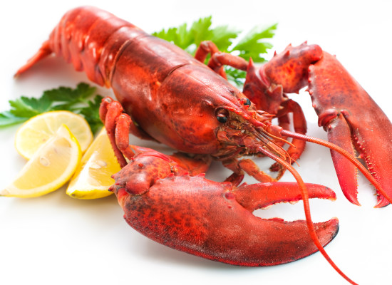 Maritime Lobster